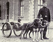 Belgian dogs trained to draw quick-firing guns