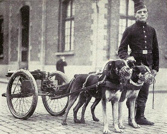 Belgian dogs trained to draw quick-firing guns