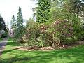 Benmore Botanic Garden (475876665).jpg