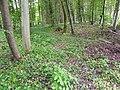 Bergheim (Kerath-römische Fundstelle).jpg