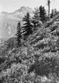 Berglandschaft im Engadin - CH-BAR - 3241553.tif