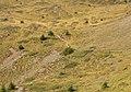 Bergtocht van Arosa via Scheideggseeli (2080 meter) en Ochsenalp (1941 meter) naar Tschiertschen 16.jpg