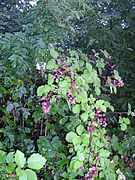 Blackberry with fruits.jpg