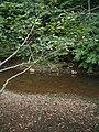 Bloomfield Provincial Park IMG 8166 (1848192005).jpg
