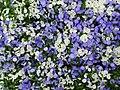 Blumen Beet - panoramio.jpg