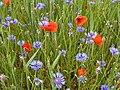 Blumen im Feld.jpg