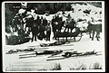 Bodies of the Four Stockmen out of the Back Country 1911.jpg