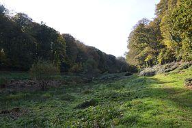 Bois Keroual automne 03.jpg