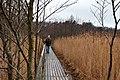 "Born am Darß, hiking trail through the nature conservation area ""Darßer Ort"".jpg"