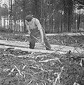 Bosbewerking, arbeiders, boomstammen, gereedschappen, Bestanddeelnr 251-9132.jpg