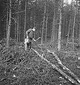 Bosbewerking, arbeiders, boomstammen, gereedschappen, Bestanddeelnr 253-5800.jpg