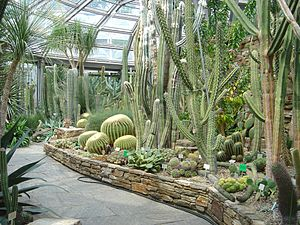Berlin-Dahlem Botanical Garden and Botanical Museum - Cactus Pavilion.