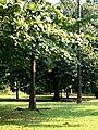 Botanical gardens, Limbe.jpg