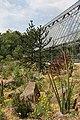 Botanischer Garten der Ruhr-Universität Bochum - panoramio (2).jpg