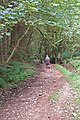 Bridleway, Rowberrow Bottom, Mendips - geograph.org.uk - 996752.jpg