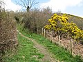 Bridleway with Gorse - geograph.org.uk - 1240472.jpg