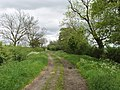 Bridleway with grass verges, near Swanbourne - geograph.org.uk - 438726.jpg