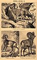 Brockhaus and Efron Encyclopedic Dictionary b42 684-2.jpg