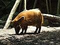 Bronx Zoo 030.JPG