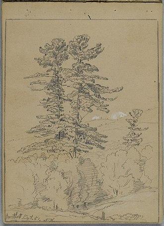 David Johnson (American artist) - Image: Brooklyn Museum Sketchbook Conway New Hampshire David Johnson