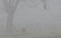 Brouillard pour modèle climat.png