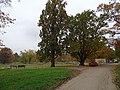 Bubeneč, Stromovka, Rudolfův rybník, stromy.jpg