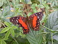 Butterfly Stratford 02.JPG