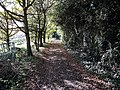 Byway from Maltmas Farm - geograph.org.uk - 1577893.jpg