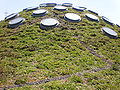 CA Academy of Sciences Living Roof 3.JPG