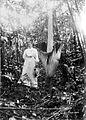 COLLECTIE TROPENMUSEUM Een Europese vrouw poseert naast een Amorphophallus titanum te Lebong Soelit Benkoelen Zuid-Sumatra TMnr 10006120.jpg