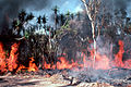 CSIRO ScienceImage 358 Intense Fire During Late Dry Season.jpg