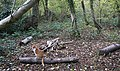 Camp Fire, Mayall's Coppice - geograph.org.uk - 620227.jpg
