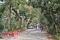 Campus Road - Jadavpur University - Kolkata 2015-01-08 2394.JPG