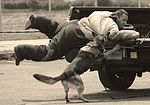 Canine teams hound victory at Top Dog competition 160516-F-RA202-067.jpg