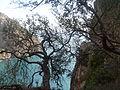 Cap Carbon derier les arbres, Wilaya de Béjaïa.JPG
