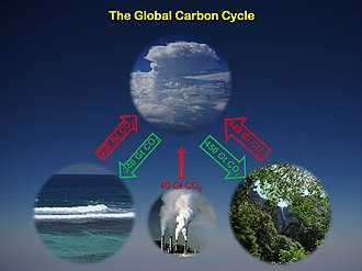 Carbon cycle - The ocean and land have continued to absorb about half of all carbon dioxide emissions into the atmosphere, even as anthropogenic emissions have risen dramatically in recent decades. It remains unclear if carbon absorption will continue at this rate.