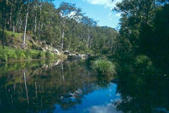 Carnarvon National Park - Carnarvon Creek and Gorge
