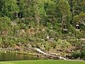 Cataract Gorge - Chairlift (26111083225).jpg