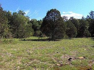 "Calcareous glade - ""Cedar glade"" in the Nashville Basin, Wilson County, Tennessee"