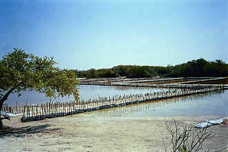 Chunchucmil - Salt evaporation ponds of Celestún in the Yucatan Peninsula