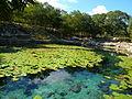 Cenote Xlacah - P1110791.JPG