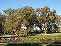 Centennial park in Sydney (20).jpg
