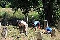 Cer-Voničko groblje (Krivaja) 18. 08. 2019 271.jpg