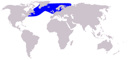 Cetacea range map White-beaked Dolphin.PNG