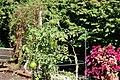 Chadwick Arboretum and Learning Gardens (44845830064).jpg
