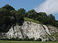 Chalk Face, Betchworth Quarry, Box Hill, Surrey.jpg