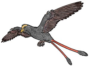 Confuciusornithidae - A depiction of Changchengornis, a member of Confuciusornithidae.