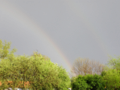 Changes of colour in alpha Rainbow Alians PL P5110041.png