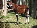 Chester Zoo (8883092143).jpg
