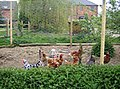 Chickens at Waterloo Lodge - geograph.org.uk - 445497.jpg